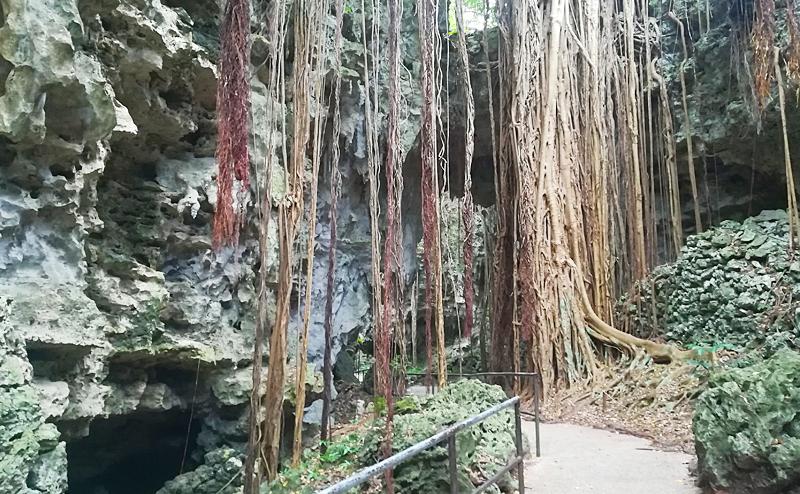 沖縄 観光 穴場 ガンガラーの谷 いないいないばぁっ